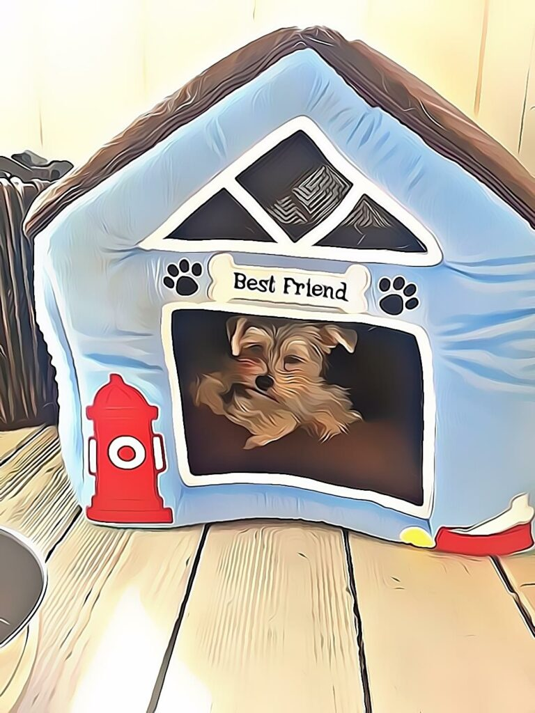 Oliver Hiding Dog House